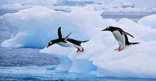 Bagaimana Menghadapi Algoritma Penguin 3.0-blog kang miftah