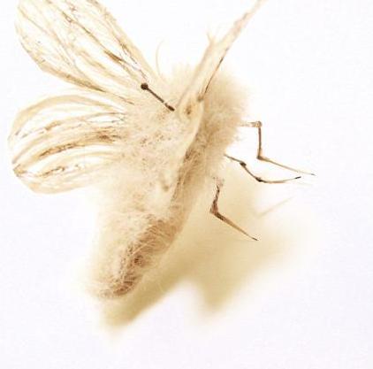 لوحات فنية لأوراق الشجر وبعض الأعمال الفنية من شعر  Hair-insects3
