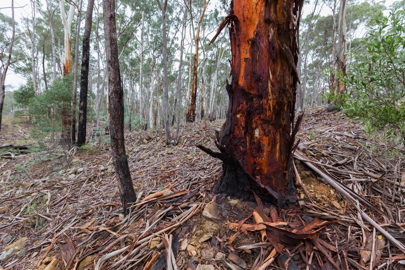 eucalypt bark strips daylesford
