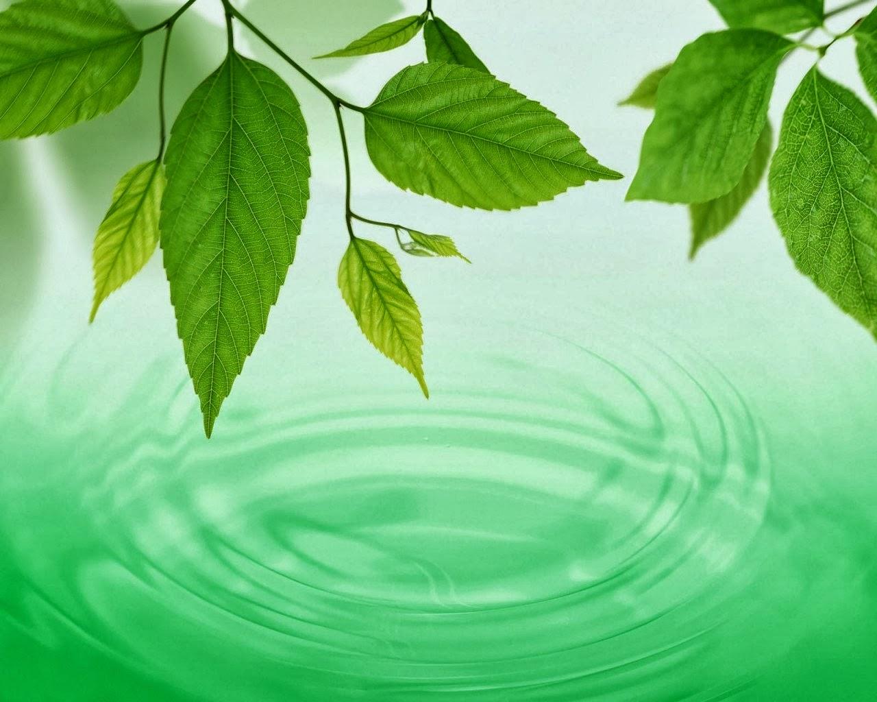 el color verde de teresa darias
