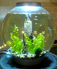 small biorb fish tank