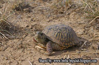 http://4.bp.blogspot.com/-F1DaVd-i0VY/TphqP-jW6ZI/AAAAAAAAFMg/vGoLjGJXzZE/s1600/3.jpg