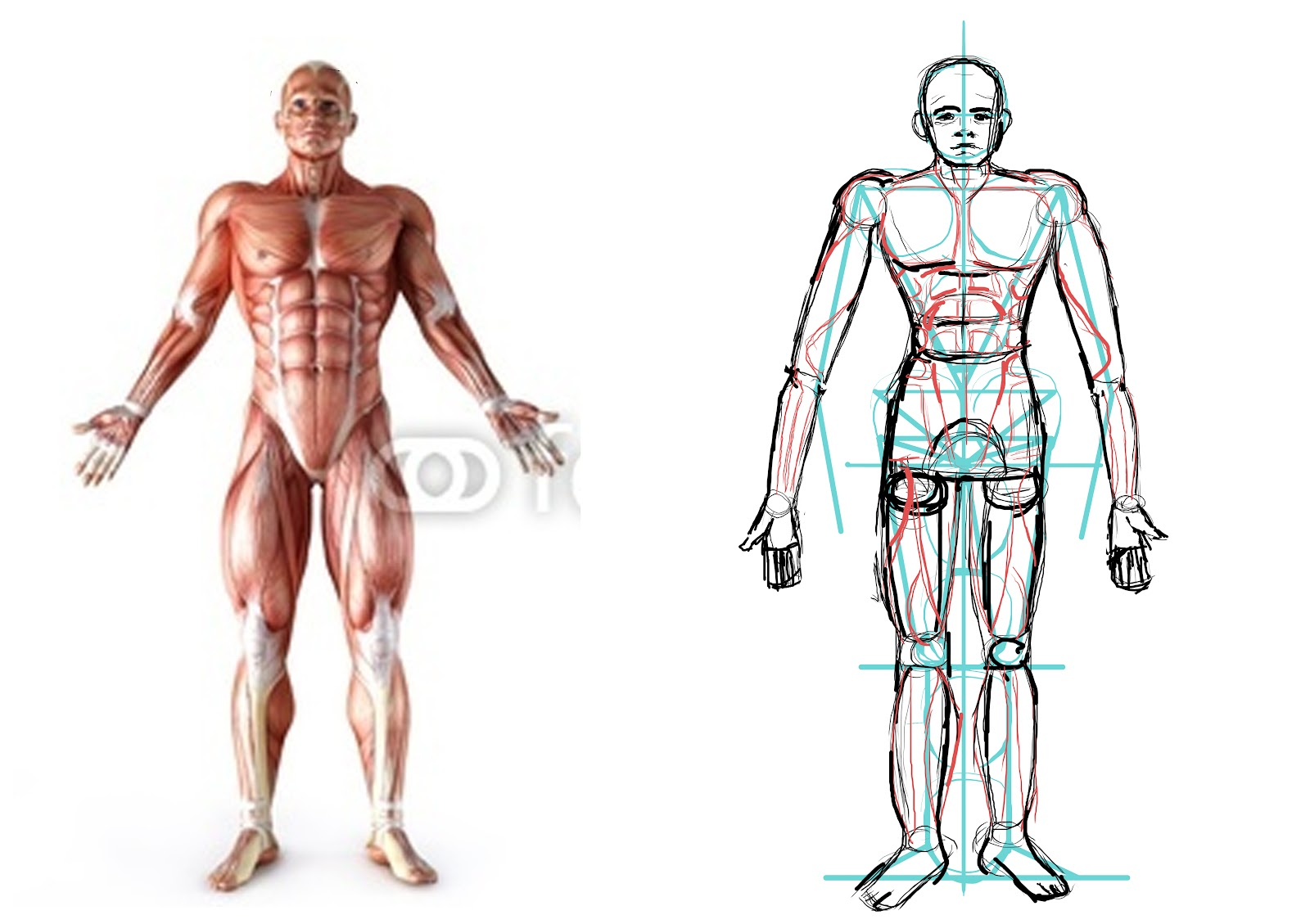 Photoshop Tutorial Basics Anatomy Drawing For Games