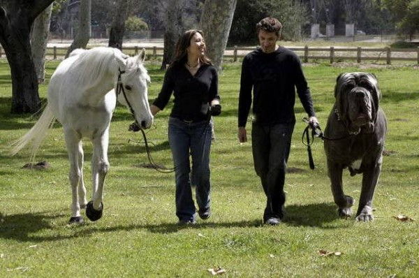 Gsv Pics - Photos with Poetry: Worlds Biggest DOGS ... - photo#29