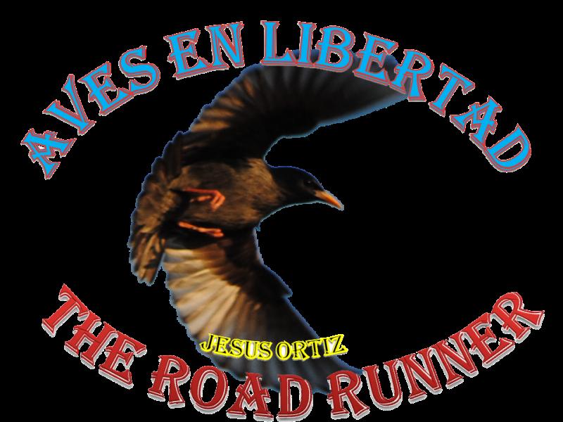 Aves en Libertad de Jesus Ortiz