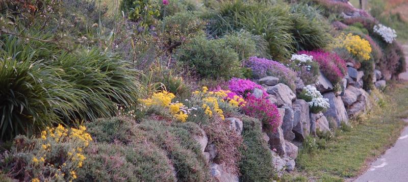 Perennia land alcuni piccoli consigli - Piante perenni per giardino roccioso ...