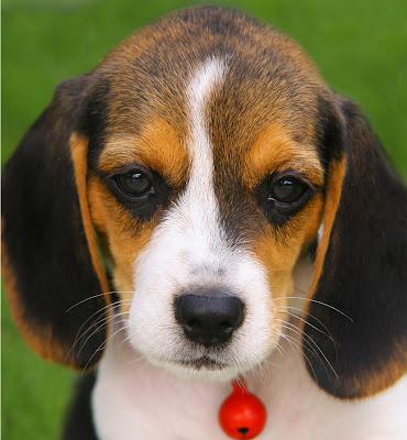 Perrito cachorro puppy