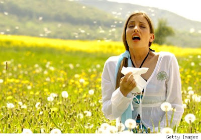Semejanzas entre el marketing tradicional y la naturaleza. Imagen que muestra como las flores desprenden el polen, al igual que en una campaña de marketing se traslada un mensaje de manera masiva.