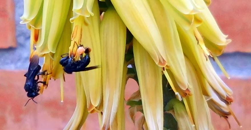 Soluciones para el hogar y el amor insectos del jard n ii for Insectos del jardin