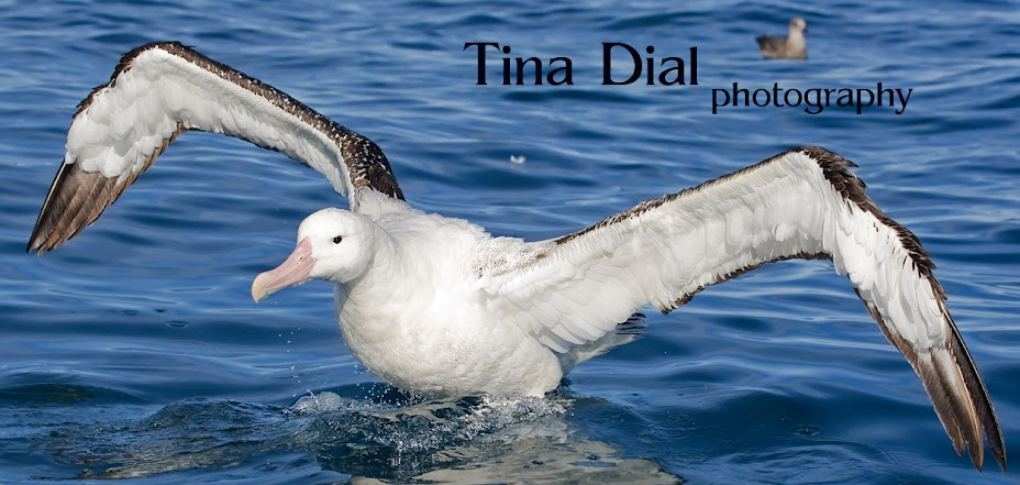 Tina Dial Photography