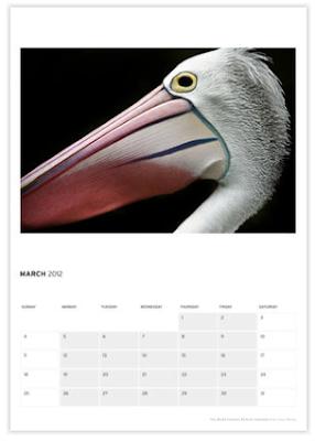 2012 pelican wall calendar