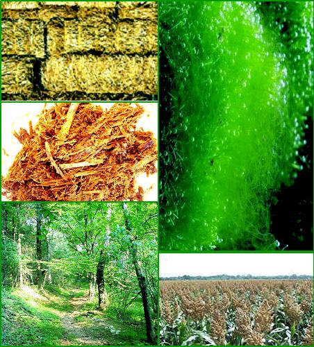 Biomassa sebagai sumber energi alternatif masa depan renewable