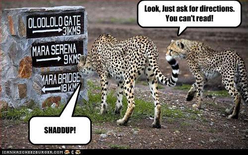 http://4.bp.blogspot.com/-F3OpK4Ai0Hs/T2rCLLQLqpI/AAAAAAAAF58/Rh2txC0Mpo0/s1600/funny-pictures-cheetahs-are-lost.jpg