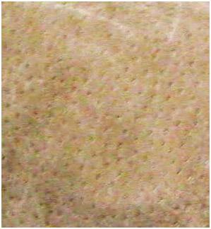Tekstur Kulit Babi