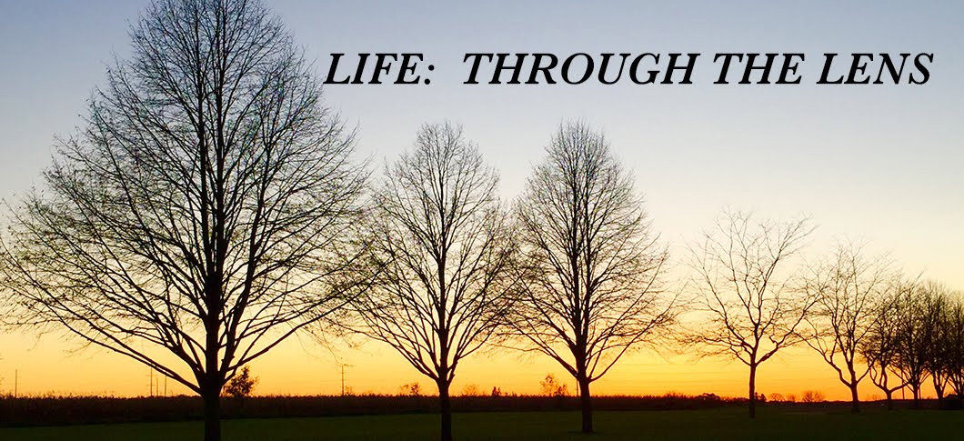 Life:  Through the Lens