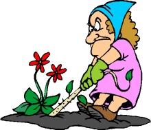 pulling weeds