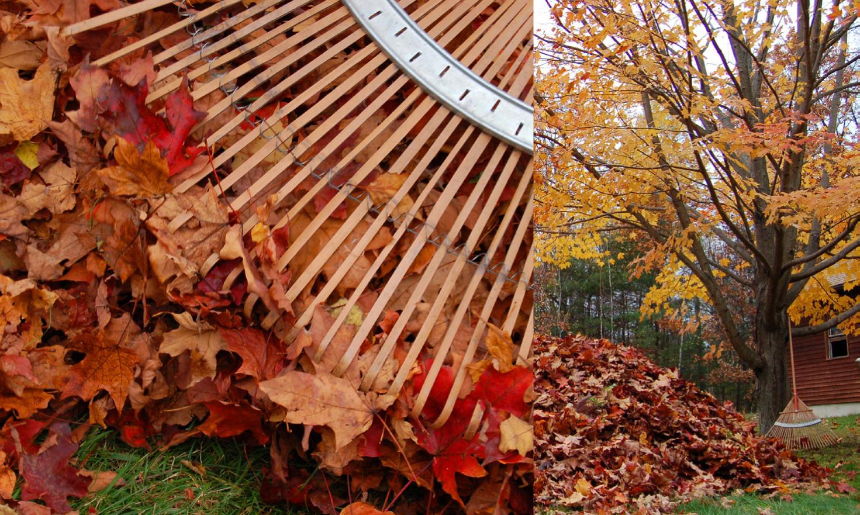 Öarnas trädgårdsplanering: oktober 2012
