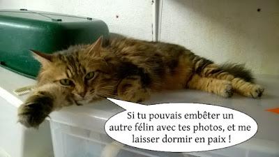 Magnifique chatte aux poils longs allongée sur une caisse.