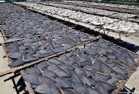 Costa Rica proíbe remoção das barbatanas dos tubarões