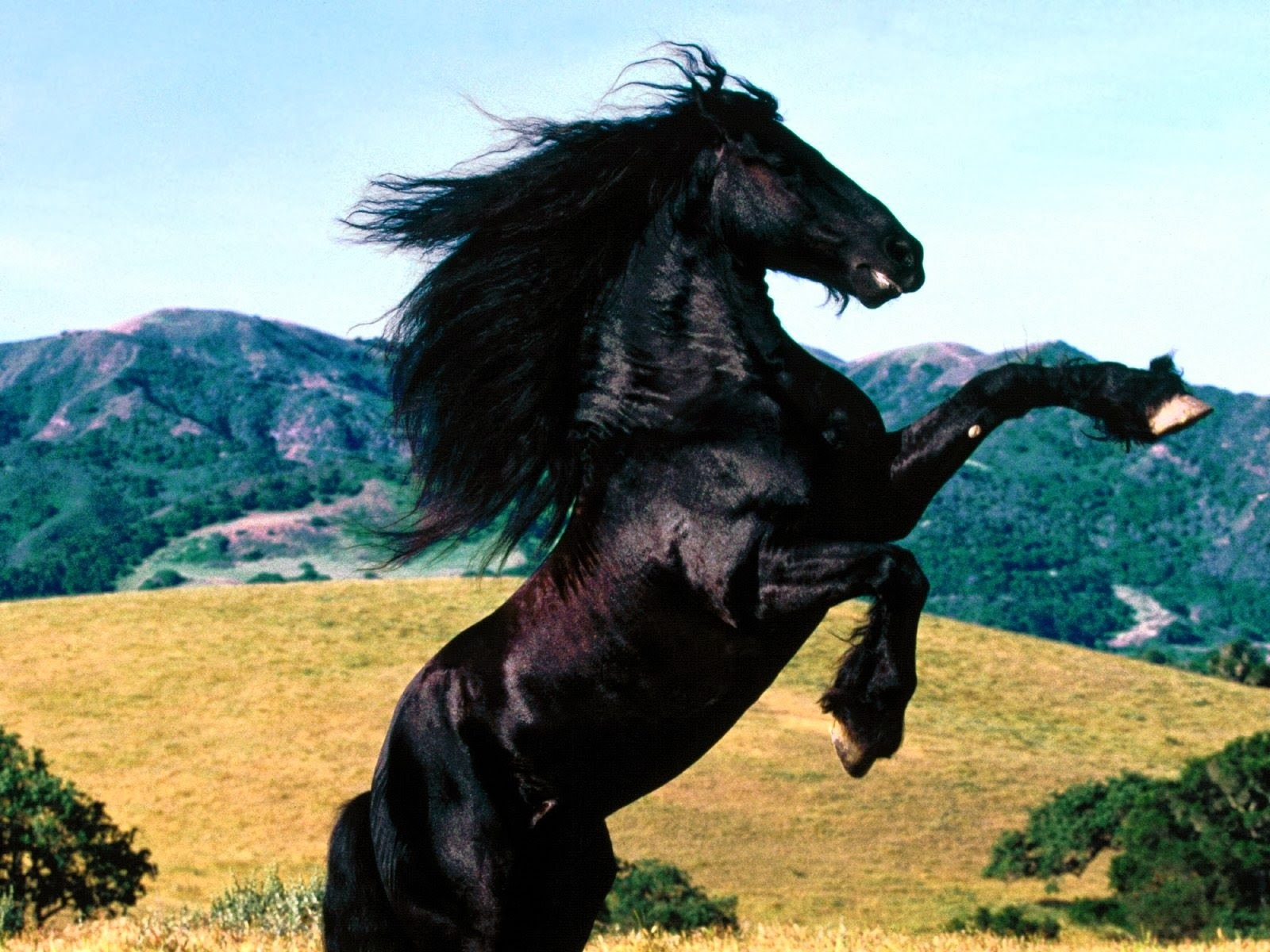 Amazing   Wallpaper Horse Screensaver - 2  Pictures_1285.jpg