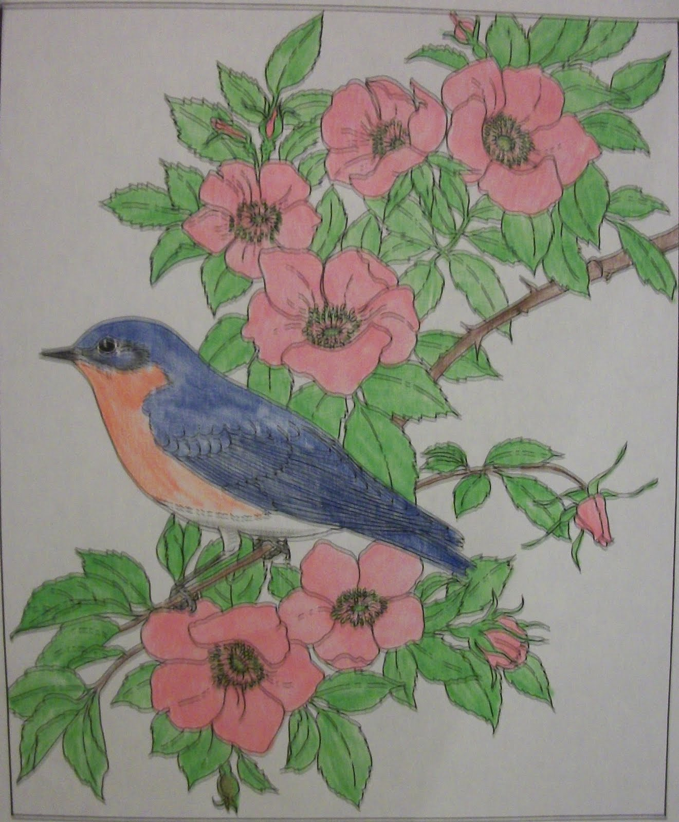 Knitted by God s Plan State Birds and Flowers