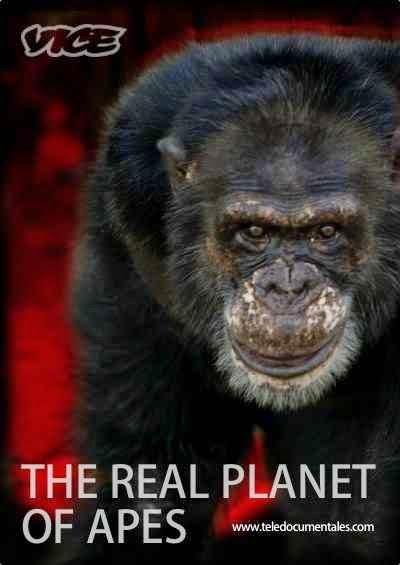 el verdadero planeta de los simios documental El Verdadero Planeta de los Simios [Documental]