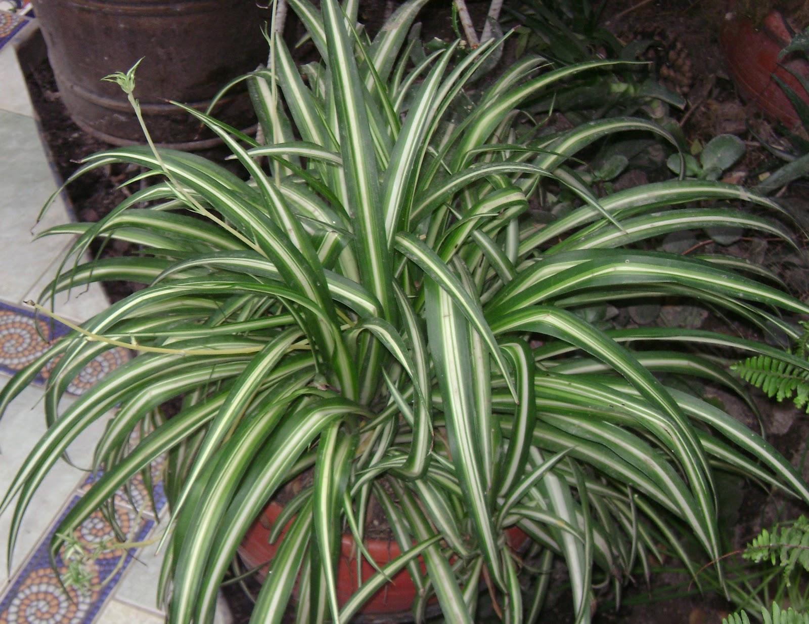 El Espiritu De Las Plantas Diciembre 2012 ~ Plantas Que Limpian El Ambiente