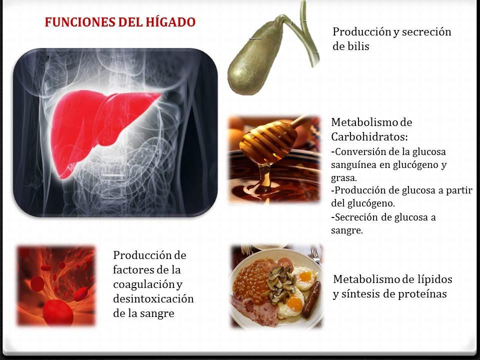 Fisiología Medica : FUNCIONES DEL HÍGADO Y ESTRUCTURA LOBULILLO HEPATICO