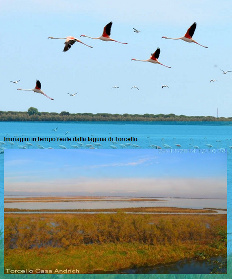 Torcello: Live Pictures of the Lagoon
