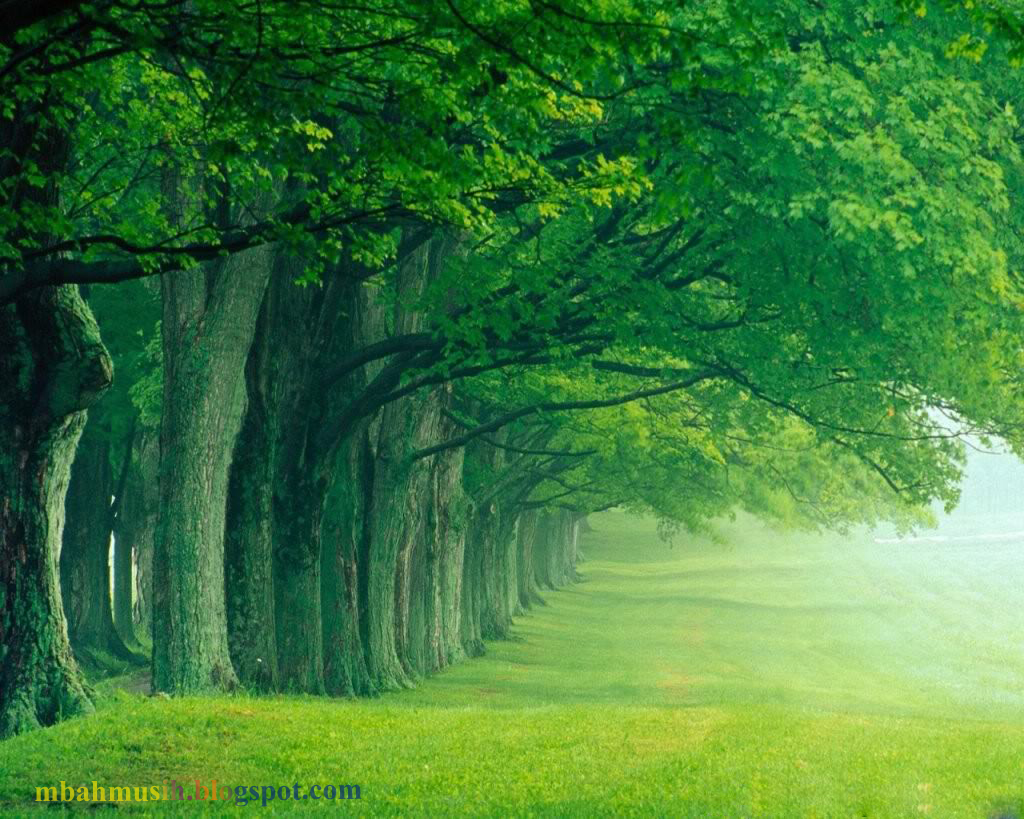 Must see Wallpaper Harry Potter Nature - green-nature-wallpaper  Collection_59871.jpg