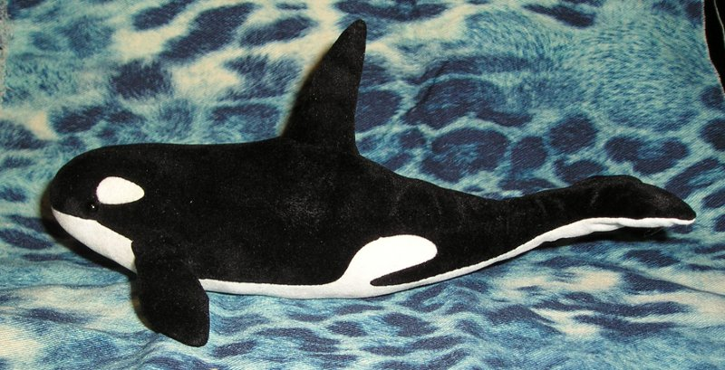 Elli\'s Animals: Orca