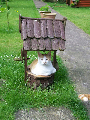 thats the way the cookie crumbles, blog, blogging, cat, wishing well, cat in wishing well, ginger and white cat, ginger, white, cute, nutmeg, garden