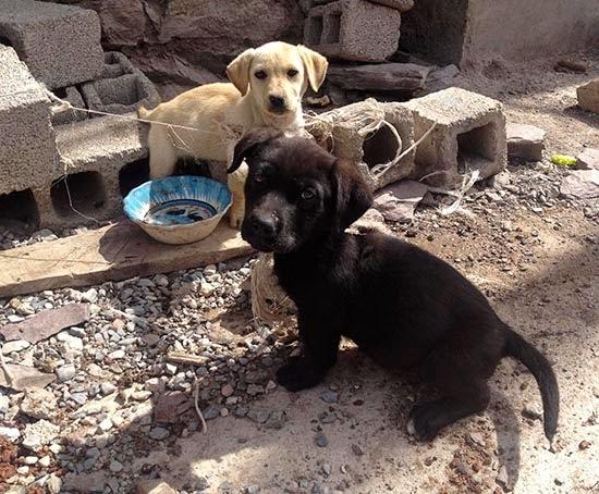 """Los dos cachorritos de Real de Catorce. Les llevamos un recipiente nuevo para el agua y pusimos un cartel que decía """"tenemos sed"""" junto a ellos. Confiamos en que las personas que pasan cada día por esa calle se animen a cuidar también de ellos y que la buena onda que les dejamos los ayude a vivir en un lugar mejor."""