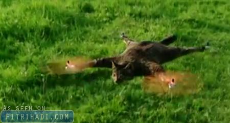 Video Lelaki Tukar Kucing Mati Jadi Permainan Helikopter