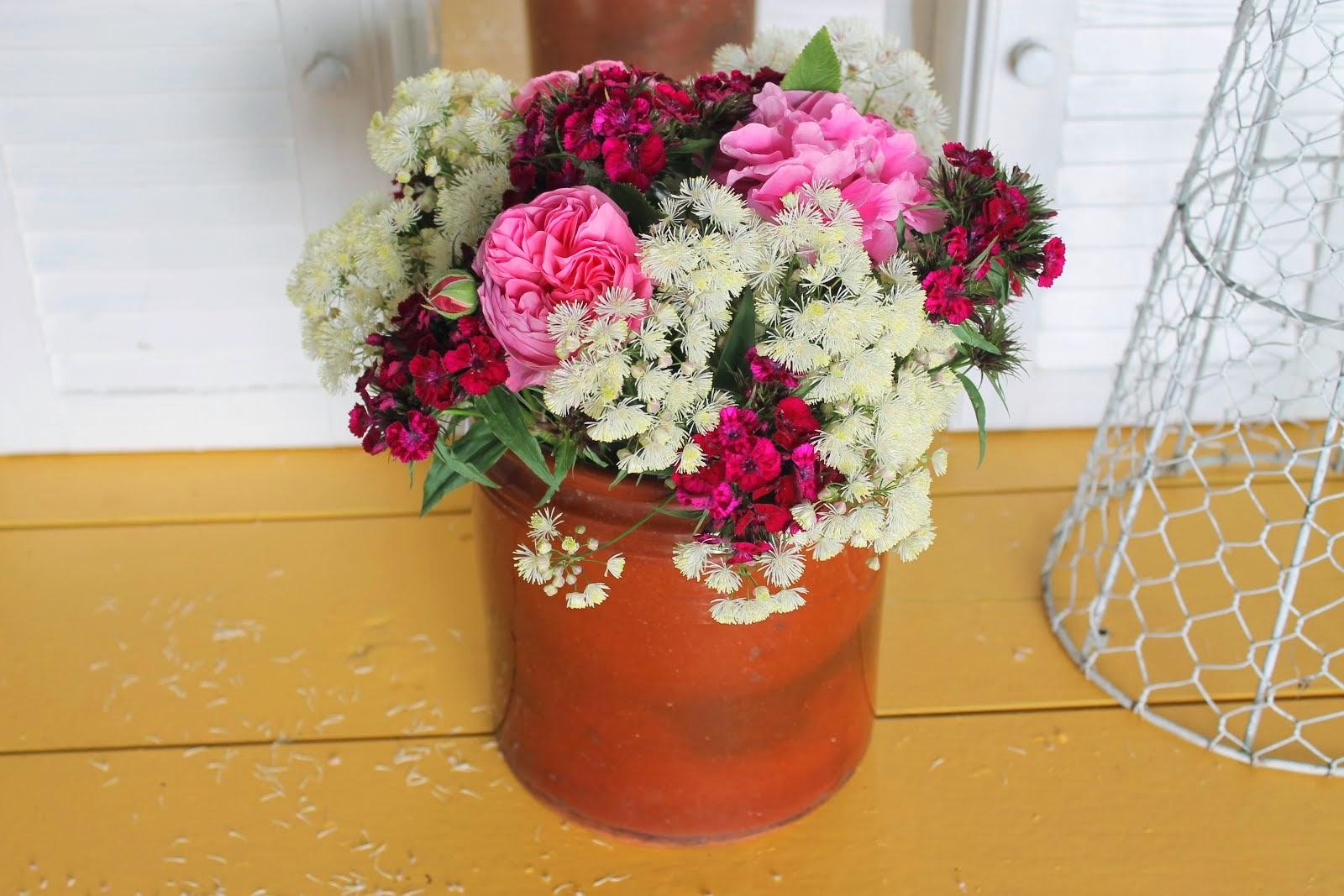 Roser,frøstjerne og busknellik