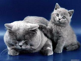Кошки живут с нами несколько тысяч лет