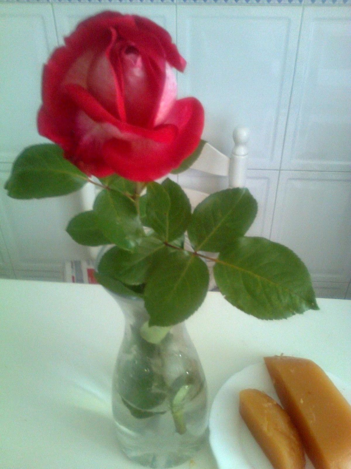 Foto de una rosa