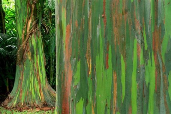 الأشجار الملونة بألوان