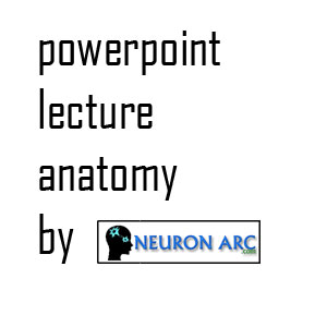 Axial Skeleton ppt – Anatomy power point