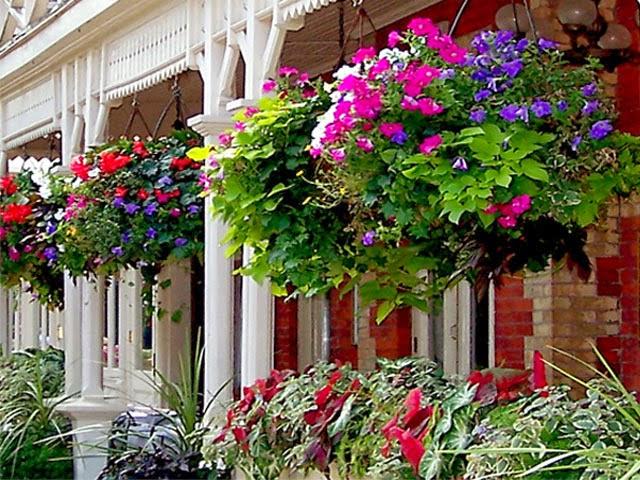 Natuur puebla jardines colgantes for Jardines de hogar