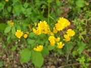 Flora #3