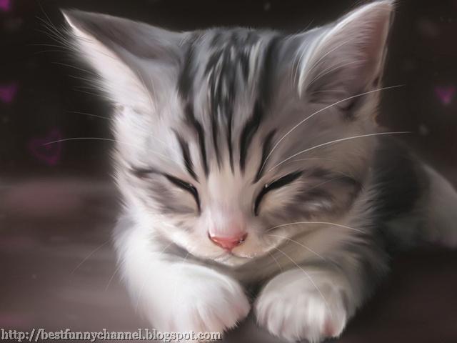 Sweet sleeping kitten