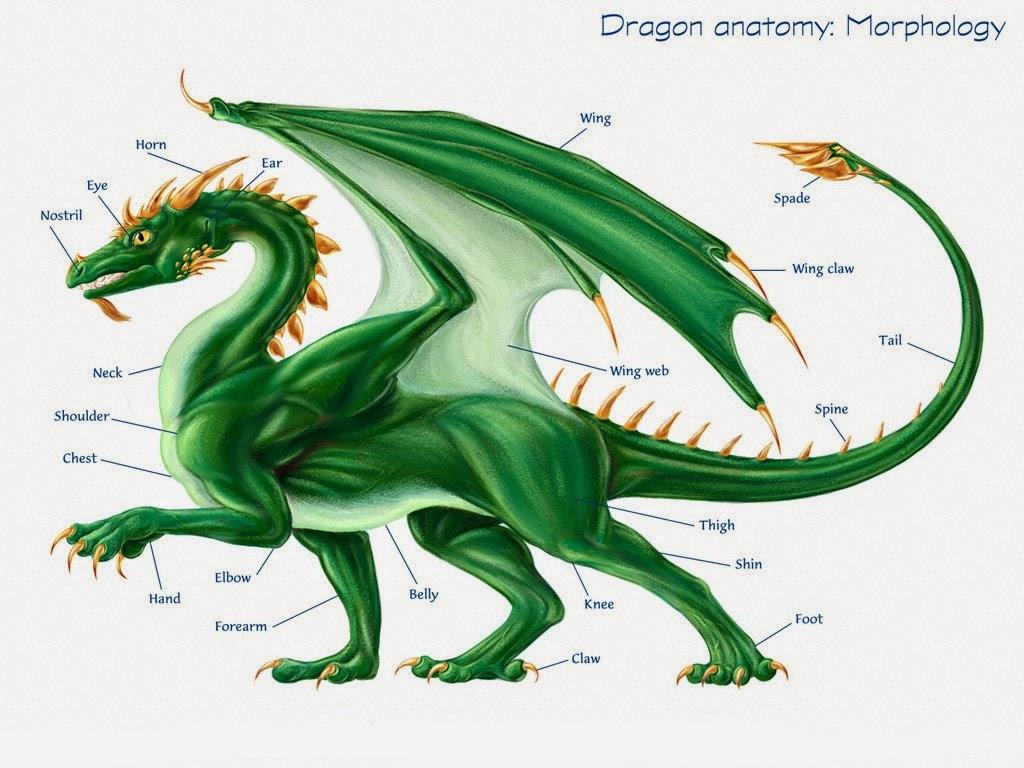 Amato Storie di draghi: I draghi PG44