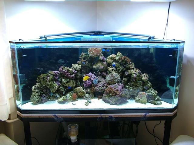 Akvaryum makaleleri akvaryum planet for Aquarium angle