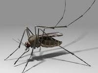 6 Cara Alami Mengusir Nyamuk
