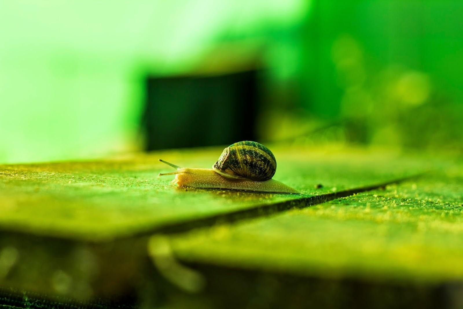 Fotografía close-uo de un caracol en fotosmacro.blogspot.com
