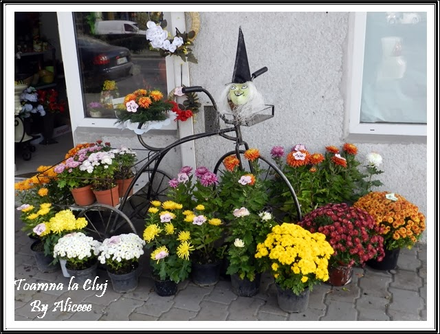 toamna-la-cluj-florarii