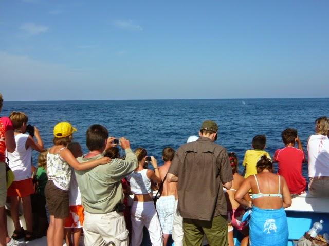 Erste Sichtung eines Wals