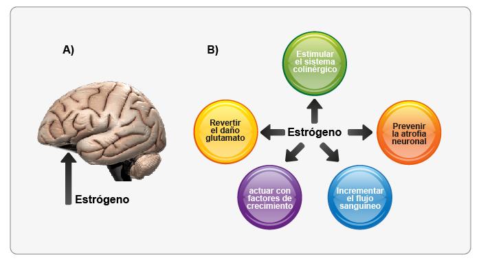 tipos de esteroides anabolicos naturales