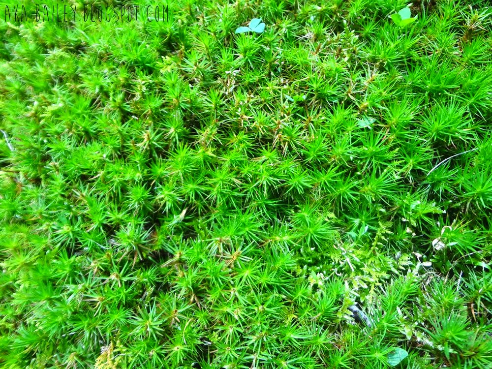 Springy green underfoot